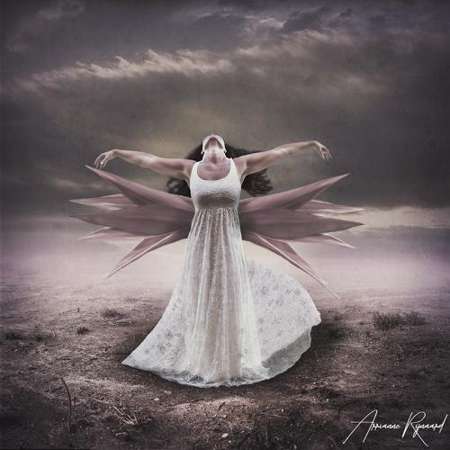 Arrianne Rijnaard - Wings of nature